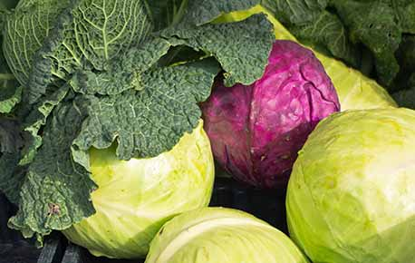 Choose cabbage leaves that are crisp and tightly pressed to the stem.