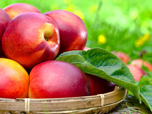 All About Nectarine