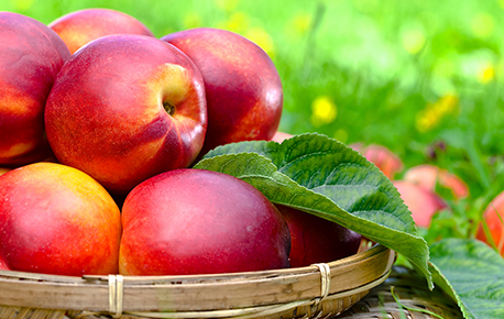 There are more than 150 varieties of nectarines but they are all very similar.