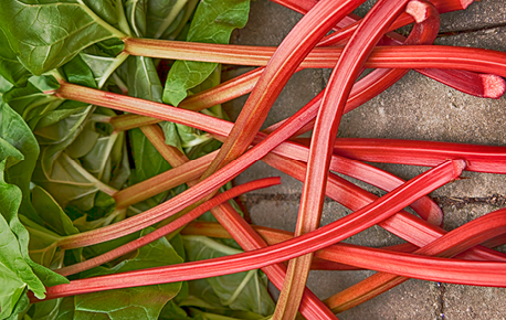 You can refresh rhubarb stalks by standing them in a pitcher of cold water for an hour or longer.