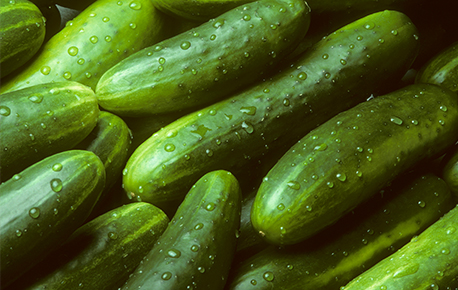 "The two main types of cucumber are the ""slicing"" and ""pickling"" varieties."