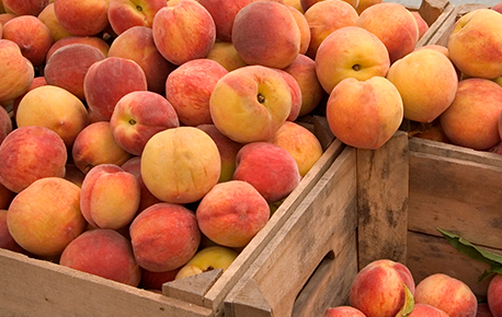 Peaches do nbot ripen once picked