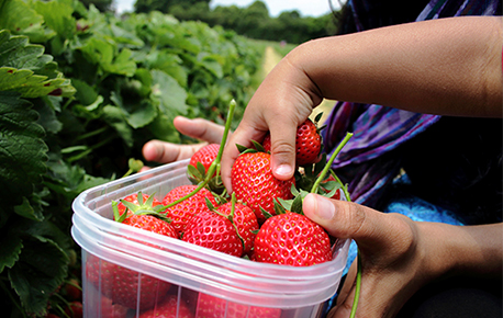 Strawberries are sweet and can be served raw for dessert or used in a salad.